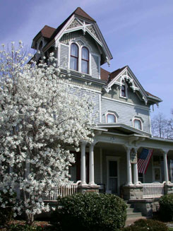Star Magnolia in bloom at Liberty House Bed & Breakfast.